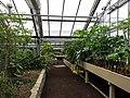 2018-06-18-bonn-meckenheimer-allee-169-botanischer-garten-monsunhaus-01.jpg
