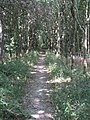 2018-07-25 Footpath in Foxhill woods, Northrepps (2).JPG