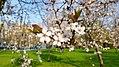 2018 Titan Park Spring.jpg