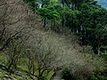 233, Taiwan, 新北市烏來區烏來里 - panoramio.jpg