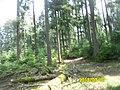 67710 Wangenbourg-Engenthal, France - panoramio (3).jpg