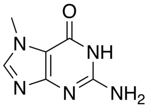 Nucleobase - Chemical structure of 7-methylguanine