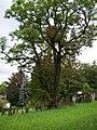 97688 Bad Kissingen, Germany - panoramio (47).jpg