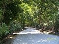 Aşiyan yolu longuner - panoramio.jpg