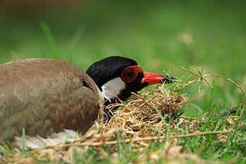 A Bird in her Nest.jpg