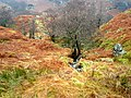 A Burn in Glen Gyle - geograph.org.uk - 687900.jpg