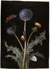 A Dandelion with a Tiger Moth, a Butterfly, a Snail, and a Beetle