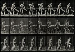 A carpenter sawing. Photogravure after Eadweard Muybridge, 1 Wellcome V0048691.jpg