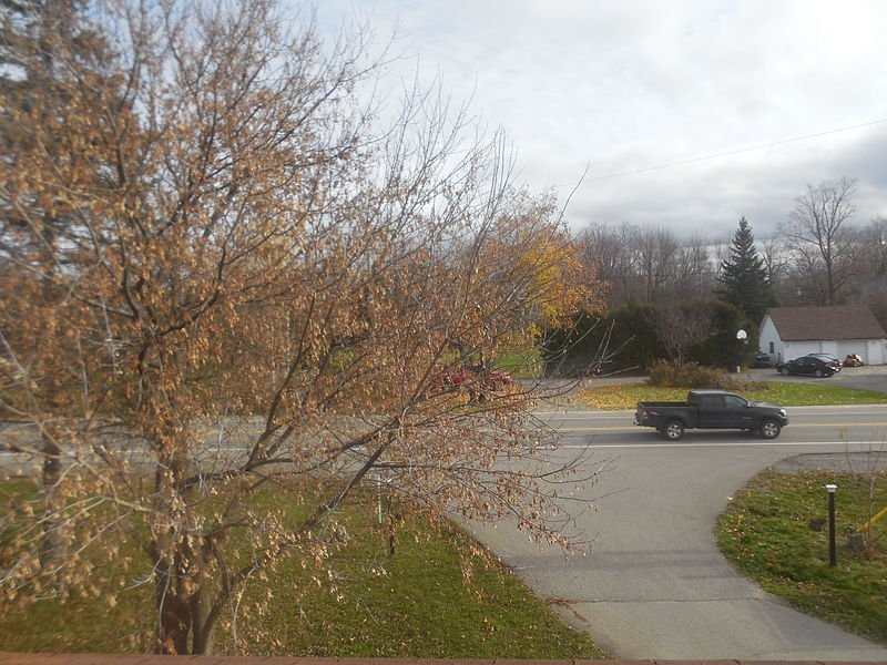 A fall tree.JPG