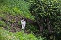 A feral cat in Malaga-1.jpg