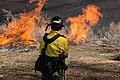 A firefighter watches burning vegetation piles in upper Courthouse Wash. These piles are accumulations of plant material from (0c87ec36-5e74-43c1-a588-36720c43a616).jpg