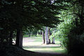 A group of trees and lawn Gibberd Garden Essex England.JPG