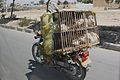 A motorbike mounts a portable coop for these chickens' penultimate trip.jpg