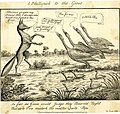 A phillipick to the geese (BM 1868,0808.4763).jpg
