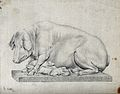 A statue of a hog with litter of suckling piglets. Pencil dr Wellcome V0021678.jpg