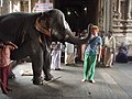 A western tourist is blessed by the temple elephant at Meenakshi temple in Madurai.jpg