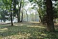 Acharya Jagadish Chandra Bose Indian Botanic Garden - Howrah 2011-01-08 9748.JPG