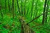 Adiantum Woods.jpg