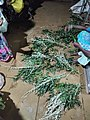 Aerva lanata and Neem being arranged to tie around house (kappu kattuthal).jpg