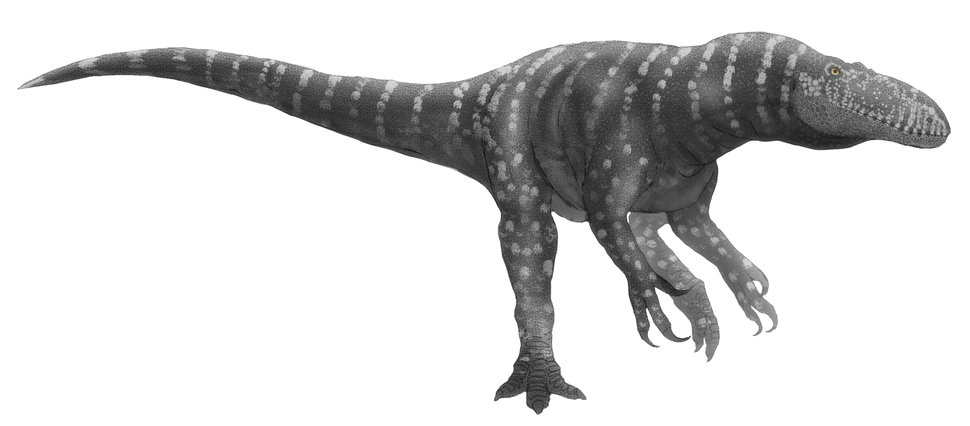 Afrovenator reconstruction