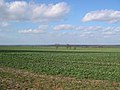 Agricultural land of Cambridgeshire - geograph.org.uk - 375477.jpg
