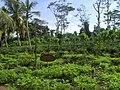Ahangama, Sri Lanka - panoramio (9).jpg