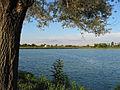 Albero sul lago (338622712).jpg