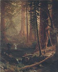 Albert Bierstadt: Giant Redwood Trees of California