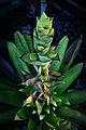 Alcantarea nahoumii flower spike (6305824976).jpg
