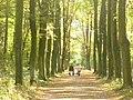 Allee im Heinrich-Laehr-Park (Avenue in Heinrich Laehr Park) - geo.hlipp.de - 29554.jpg