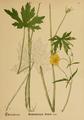 American Medicinal Plants-006-0047.png
