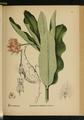American Medicinal Plants-2-0743.png