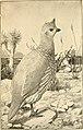 American game-bird shooting (1910) (14753092224).jpg