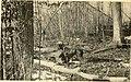 American game-bird shooting (1910) (14755457665).jpg