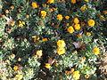 Amin al-Islami Park - Trees and Flowers - Nishapur 050.JPG