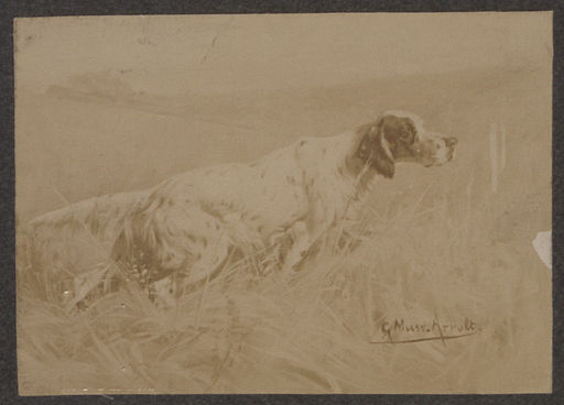 An English Setter of the breed coming from the kennel of PL Llewellyn and sometimes termed the Llewellyn Setter photograph of a drawing (HS85-10-14981)
