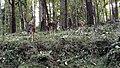 Anamalai Tiger Reserve - panoramio (14).jpg
