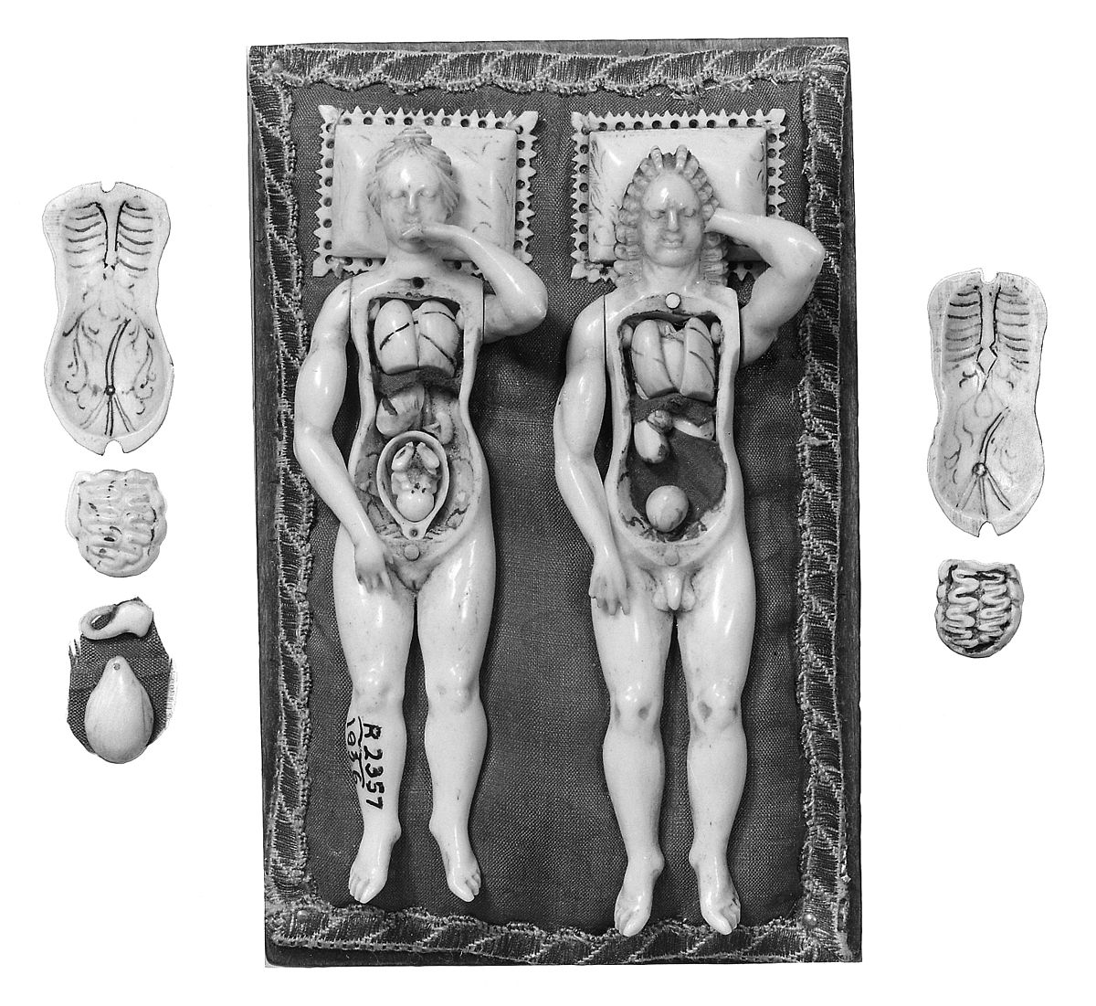 Anatomical figures in ivory; 1 male and 1 female. Wellcome M0018662EB.jpg