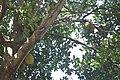 Andromeda Botanical Gardens 19.jpg