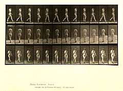 Animal locomotion. Plate 23 (Boston Public Library).jpg
