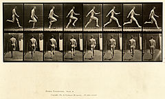 Animal locomotion. Plate 65 (Boston Public Library).jpg