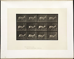 Animal locomotion. Plate 697 (Boston Public Library).jpg