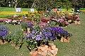 Annual Flower Show - Agri-Horticultural Society of India - Alipore - Kolkata 2013-02-10 4737.JPG