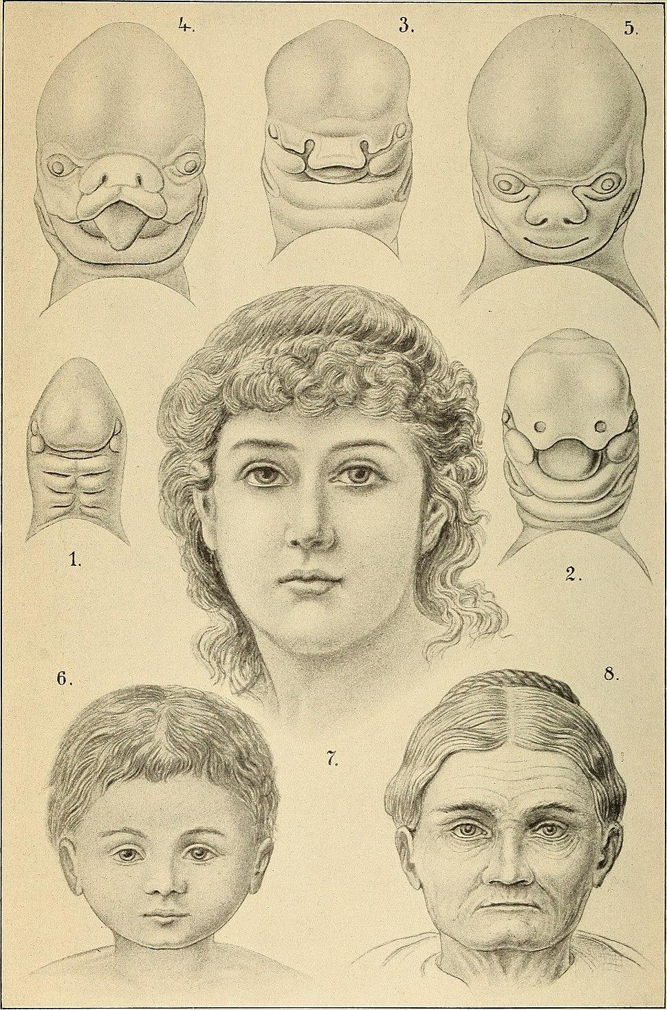 Anthropogenie; oder, Entwickelungs-geschichte des Menschen (1910) (19181312270)