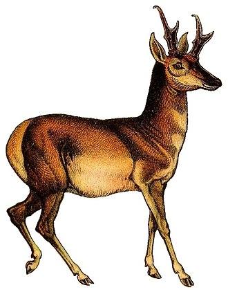 Giraffe - 50 px