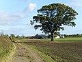 Approaching Newfields Farm - geograph.org.uk - 1530777.jpg