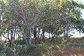 Araguainha - State of Mato Grosso, Brazil - panoramio (117).jpg