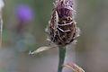 Araignées, insectes et fleurs de la forêt de Moulière (Les Chirons Noirs) (29011084066).jpg