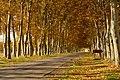 Aranjuez. Retazos de otoño (15477212491).jpg