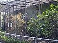 Arboretum Zürich - Voliere 2012-03-28 15-28-26 (P7000).JPG